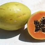 Papaia, dusmanul grasimilor