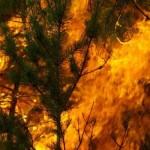 Incendii Maramures