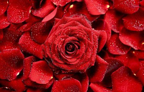 Pe tava clientilor in florarii de 8 Martie? Flori criogenate de la CrioFlowers